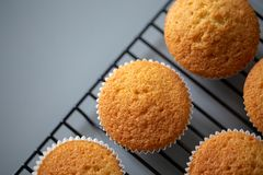 Cupcake just cooked straight out of oven royalty free stock photos
