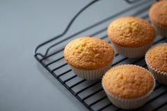 Cupcake uit oven rechtstreeks enkel wordt gekookt die stock foto's