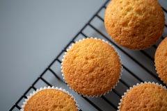 Cupcake uit oven rechtstreeks enkel wordt gekookt die royalty-vrije stock foto's