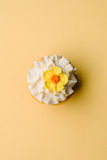 Cupcake on yellow, with a yellow flower Royalty Free Stock Photography