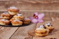 Σπιτικά cupcakes με τη σοκολάτα και την κονιοποιημένη ζάχαρη στοκ φωτογραφίες