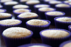 Cupcakes. Rows of cupcakes in purple cases Royalty Free Stock Photography