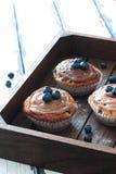 Cupcakes με τα βατόμουρα και το κάλυμμα σοκολάτας Στοκ φωτογραφία με δικαίωμα ελεύθερης χρήσης