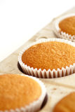 Cupcakes. Freshly baked vanilla cupcakes cooling in baking pan royalty free stock photography