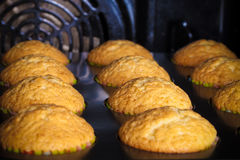 Cupcakes on a baking tray in the open oven. Selective focus. Sha Stock Image