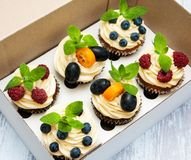 Cupcakes in a box Stock Images