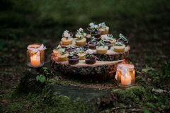 Cupcakes and Candles on Stump Surrounded by Moss Stock Photography