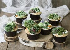 Cupcakes decorated with creamy succulents royalty free stock image