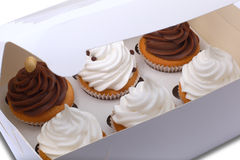 Cupcakes in a delivery box. A delivery box contains six cupcakes with chocolate cream Stock Photography