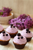 Cupcakes dessert decorated with berries in purple Stock Photos