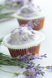 Cupcakes with frosting Royalty Free Stock Image