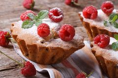 Cupcakes with raspberries, powdered with sugar horizontal Royalty Free Stock Images