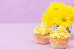 Cupcakes verfraaide met gele room en chrysanten op violette pastelkleurachtergrond voor groetkaart met copyscape Stock Foto