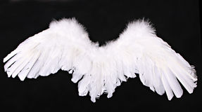 Cupid Angel Wings Photography Prop. On Black Background royalty free stock photography