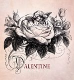 Valentine`s cupid with arrow, vintage. Cupid with arrow hidden among the petals of a rose, Valentine greetings Royalty Free Stock Photography