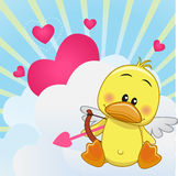 Cupid Duck Stock Photo