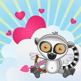 Cupid Lemur Stock Images