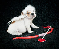 Cupid Puppy Stock Photography