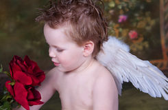 Cupid with Roses. Cupid looking down at Red Roses stock images