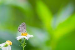 Cupido llano que come en la flor Fotos de archivo libres de regalías