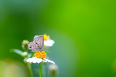 Cupidon simple mangeant sur la fleur Photo stock