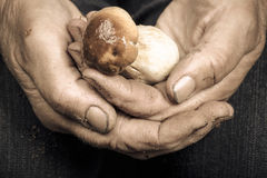 Cupped hands of an elderly woman with white mushroom Royalty Free Stock Photos