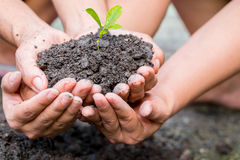 Cupped hands holding a green plant Royalty Free Stock Images