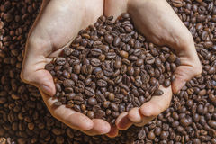 Cupped hands holding handful of roasted coffee beans Stock Image