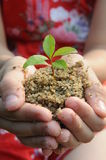 The cupped hands holding a seedling Stock Images