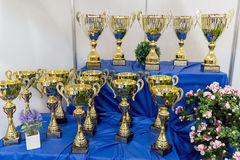 Cups at the international exhibition of cats Stock Photography