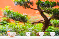 Cups of tea with bonsai Stock Photography