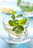 Cups of tea with fresh mint Stock Images