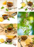 Cups of tea, mint and lemon closeup Royalty Free Stock Images