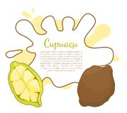 Cupuacu Exotic Cupuassu, Cupuazu and Copoasu. Tropical rainforest fruit related to cacao vector poster frame and text. Dieting vegetarian icon, edible royalty free illustration
