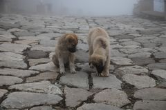 Cur puppy in foggy day on the stone lane. mist and dogs royalty free stock photo