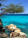 Curaçao蓝色海滩 库存图片