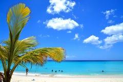 Curaçao vara imagen de archivo libre de regalías
