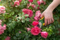 Cura del giardino Fotografia Stock Libera da Diritti