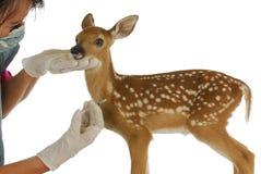 Cura del veterinario della fauna selvatica Immagine Stock
