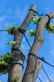 Cura dell'albero immagini stock