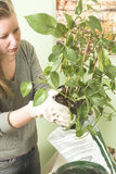 Cura della pianta Fotografie Stock