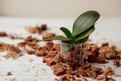 Cura della pianta Fotografia Stock Libera da Diritti