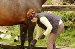 Cura per il cavallo Fotografia Stock