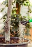 Cura per le piante Fotografia Stock