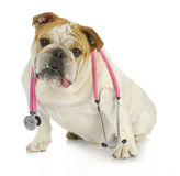 Cura veterinaria Fotografie Stock Libere da Diritti