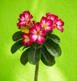 Curacao flowers Royalty Free Stock Photography