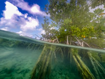 Curacao van mangrovewortels meningen Stock Fotografie
