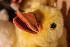 Curandero del curandero - juguete amarillo relleno mullido borroso del pato - primer de la cara y cuenta y foco selectivo fotografía de archivo libre de regalías