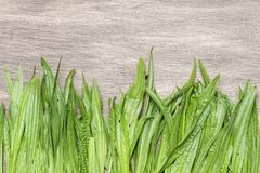 Curative background with a fresh plantain. Royalty Free Stock Photos