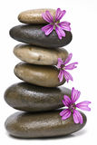 Curative stones and purple flowers. Stock Images